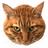 Toramaru13's avatar