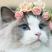 Libellester's avatar