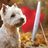 Ironwestie's avatar