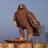 Ragnockae136's avatar