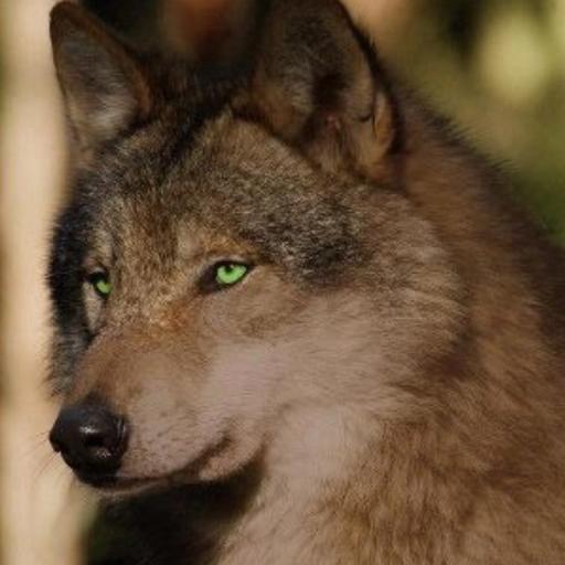 Blackclovershewolf's avatar