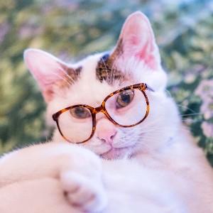 The Kitten Show's avatar