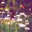 Bernsteinblick.Ambersight03's avatar