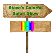 Steve's Colorful Safari