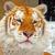 TigerInASuit