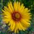 Posie Wildflower