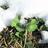 Cloverfrost12's avatar