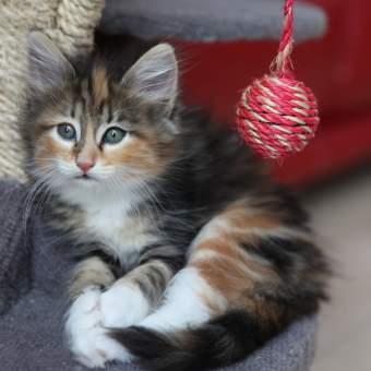 Kitty with yarn ball