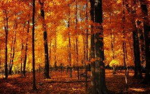 Autumn-forest 00396190