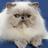 Haydenciscool's avatar