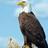 Eris2008's avatar