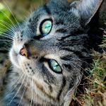 Silverleaf36's avatar