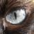 MagnusMagister's avatar