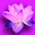 Blumenblatt