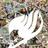 Gameingwolf104's avatar