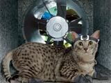 Card 140: The Cat Burglar