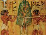 Card 76: The Myrrh Tree