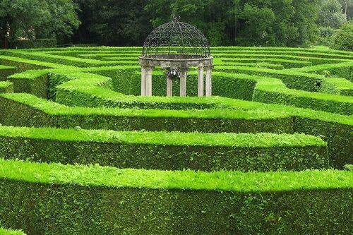 Alistair Hedge Maze.jpg