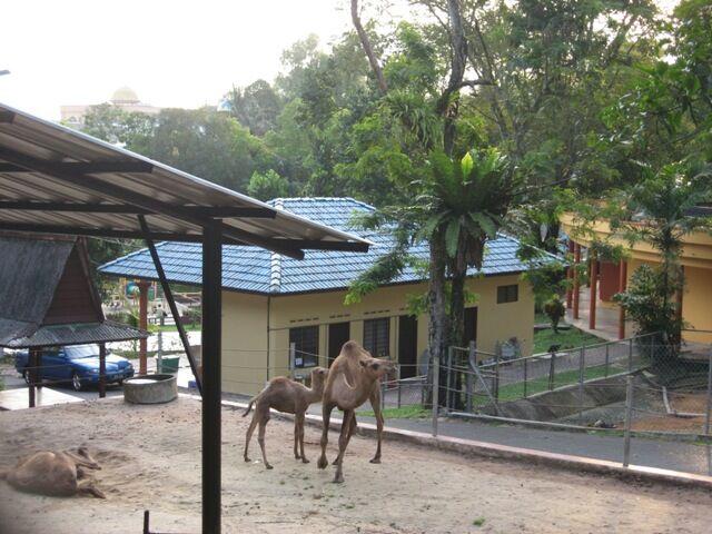 Kabra Zoo.jpg