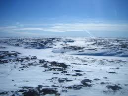 Tundra.jpg