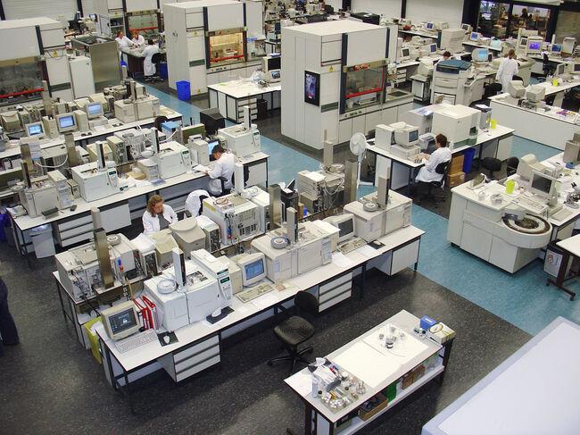 Bermuda Lab.jpg