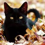 Кіт Чарлі/Пісочниця