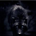 Nightmarewolfgirlhowler's avatar