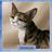 DuliShow's avatar