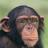 WildPrimate597's avatar
