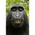 MonkeyheadDX88