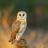 Ombekende's avatar