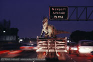Allosaurus transport
