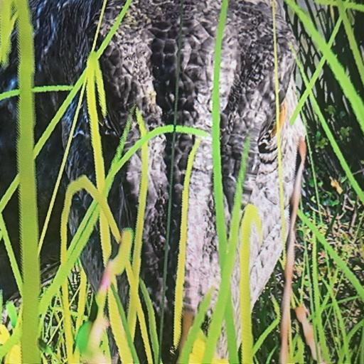 Itsa.indoraptor's avatar