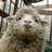 Wuddup12345's avatar