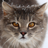 Saevon's avatar