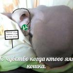KtooooYaaa1337's avatar