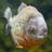 Pandabaer5555's avatar
