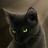 Ostrolistaya217's avatar