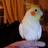 Rebmiami's avatar
