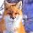 Fox-Stormfur's avatar
