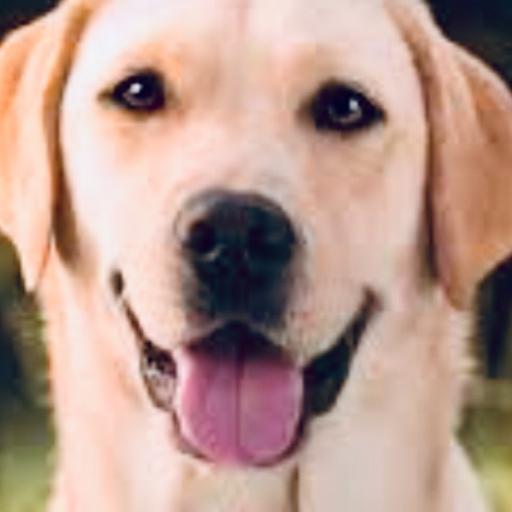 Pups are so cute's avatar