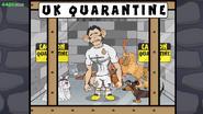Bale quarentine cat dog
