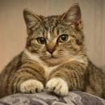 Кот Мар-кот