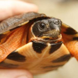 TurtleExpress's avatar