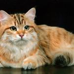 Янтарная Кошка's avatar