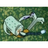 SpongeBot SteelPants's avatar