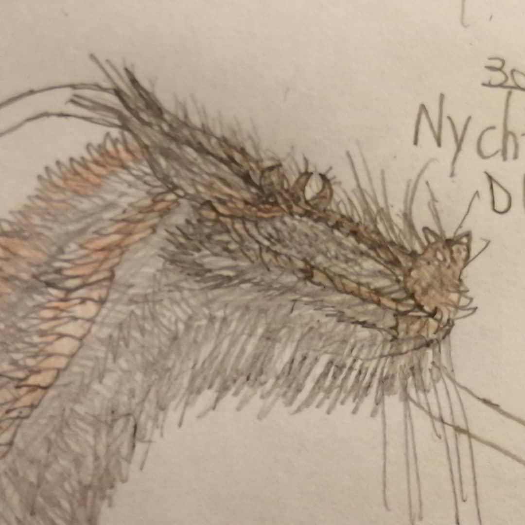 "Gargantuan_eclypse. OC on Instagram: ""Kaiju profile:Chipteros  Common name:Chipteros Scientific name:Nychtevenator draculae Threat level⚠️:low-medium Distribution:worldwide…"""