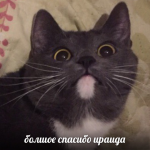 Iratupaya's avatar