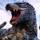 Carnotyrannus Rex