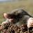 Eleven03's avatar